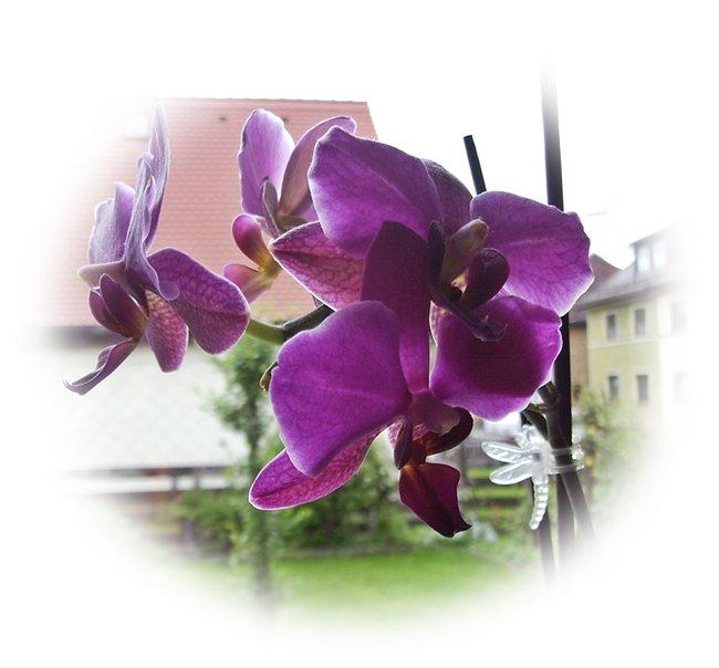 orchidee stein steine edelsteine mit geschichte und eigene sch tze heilsteine. Black Bedroom Furniture Sets. Home Design Ideas